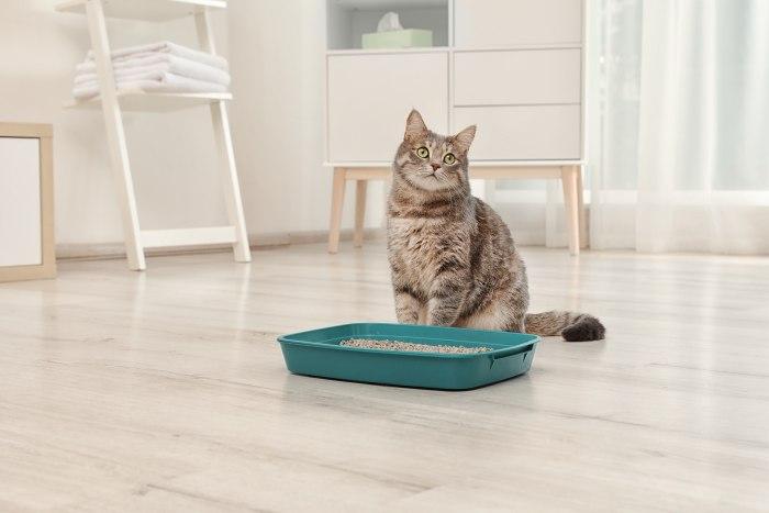 How To Remove Cat Urine Odors | OdorXit