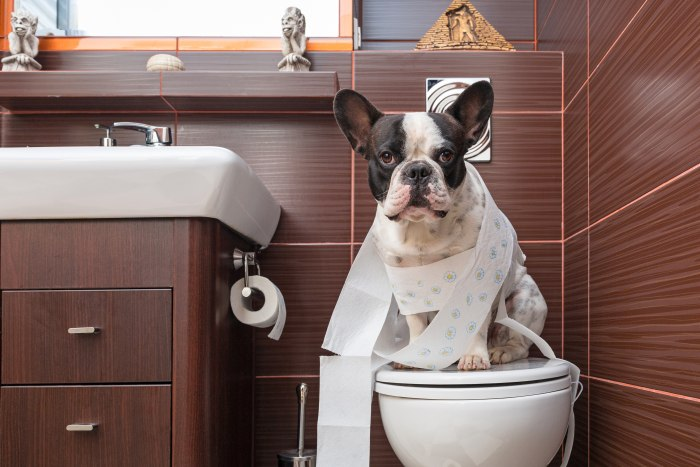 Remove Dog Urine Odors