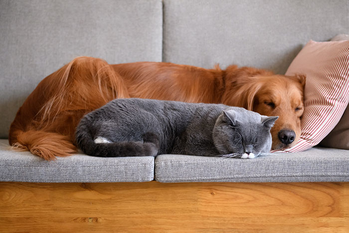 OdorXit Eliminates Pet Furniture Odors